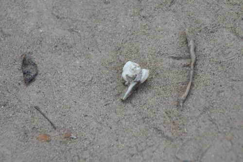 A broken tooth found at Killing fields