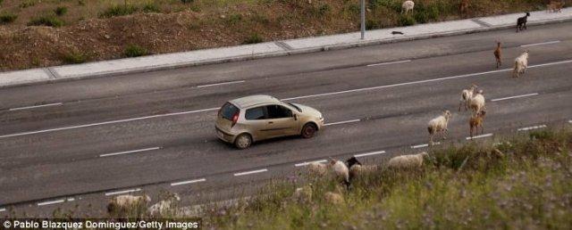 geitenes motorvei