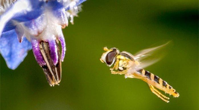 Tyskland: Massiv insektdød truer økosystemet