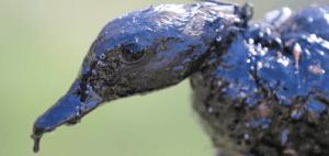 Exxon Oil Spill in Arkansas