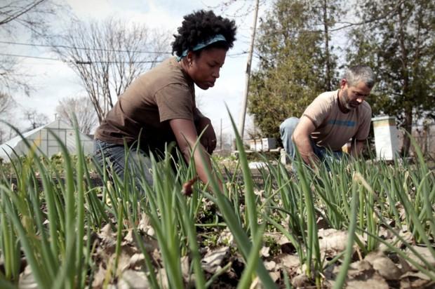 Urban Farm (Image via Salon)