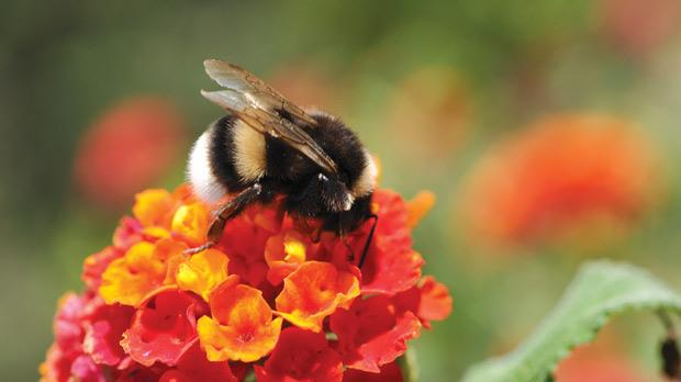 Bees and insecticides