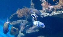 A trip to the Aquarium in Barcelona