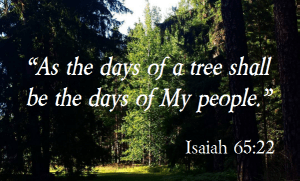 Isaiah 65-22 days of a tree