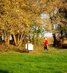 Fellow beekeeper