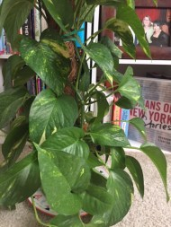 plants-and-books