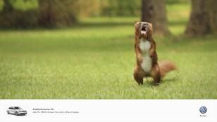 volkswagen-golf-jetta-polo-small-but-ferocious-print-369997-adeevee