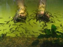 Singapore Zoo: Fish Spa