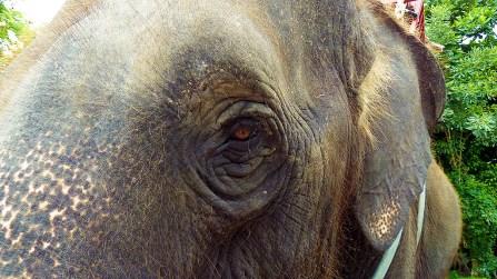 Samphran elephant