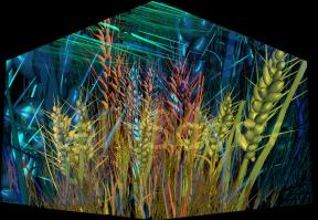 3D Wheat Concept by Eleanor Gates-Stuart: Enlighten 2013 Architectural projection on Questacon