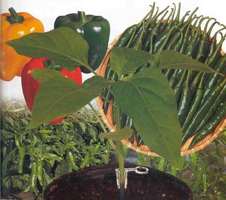 Agriculture and Related Biotechnologies