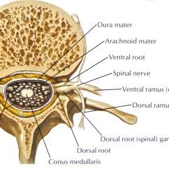 Lumbar Nerve Root Diagram 2jz Ge Ecu Wiring Orthopedic Stem Cell Injections For Sciatica Stemcelldoc