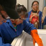 To overcome decades of mistrust, a workshop aims to train Indigenous researchers to be their own genome experts
