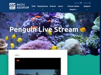 Mystic Aquarium's African Penguins