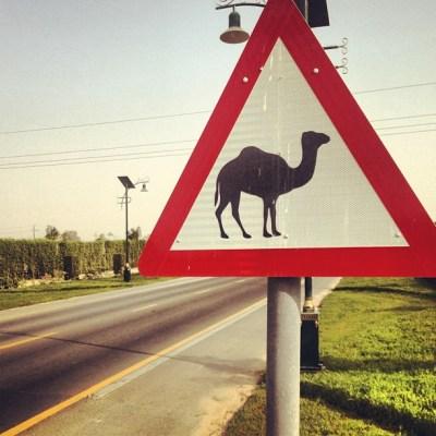2013.06.29 - Знак с верблюдом из Дубаи, ОАЭ (Angelika Schwaff - Ichweisswo.blogspot.com)