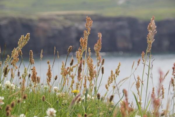 Irland 21.6 --28.6.2014 500