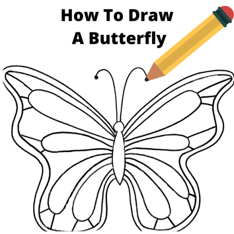 How To Draw A Butterfly Easy Step By Step Drawing Tutorial