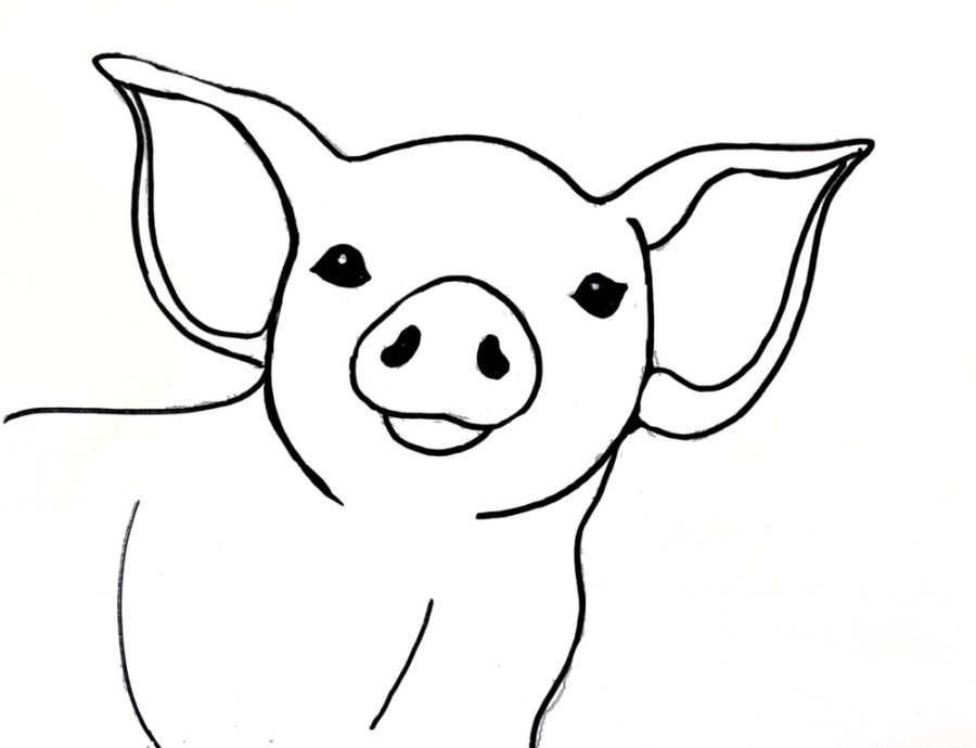 Traceable template for pig painting.