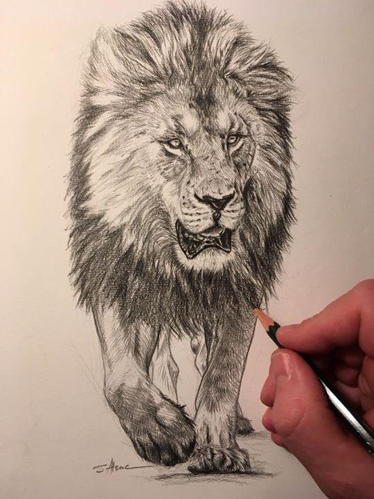 Dessin Au Crayon A Papier : dessin, crayon, papier, Blacky, Portrait, Graphite, Paper, Detail, Dessin, Crayon, Stéphane, Alsac
