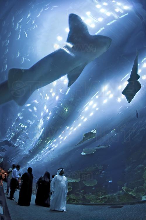 Grand aquarium: Top 10 des plus grands du monde