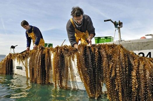 Photo c-weed-aquaculture