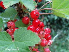 Red Currants - my favourite!