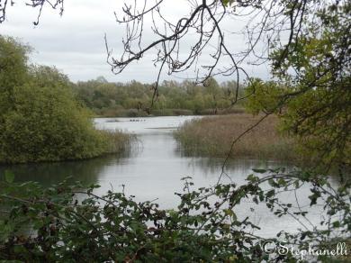 Teddy's Lake