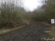 A bit muddy!