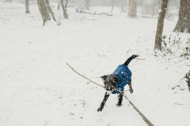 oscar-bigboots-stephanie-louise-green-pet-photography-photographer-in-north-london-n7-n8-highgate-crouchend-hampstead-muswell-hill-cute-dog-in-snow-winter-patterdale-collie-terrier-24