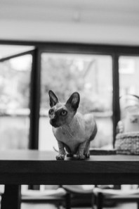 stephanie-green-weddings-modern-family-portrait-pet-family-dog-sphynx-cat-contemporary-london-uk-41