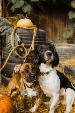 stephanie-green-london-content-creator-social-media-management-doggy-daycare-hairy-hounds-in-hackney-145