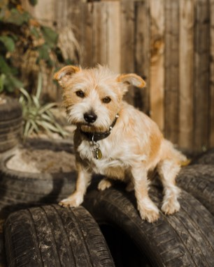 stephanie-green-london-content-creator-social-media-management-doggy-daycare-hairy-hounds-in-hackney-224