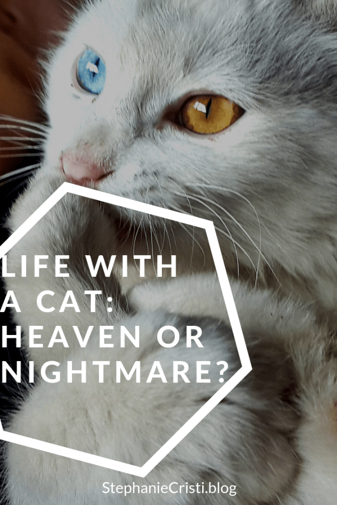 Life With a Cat: Heaven or a Nightmare?