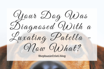 StephanieCristi details what to do if your dog was diagnosed with a luxating patella including: grades 1-4, how to manage it, and pup's prognosis.