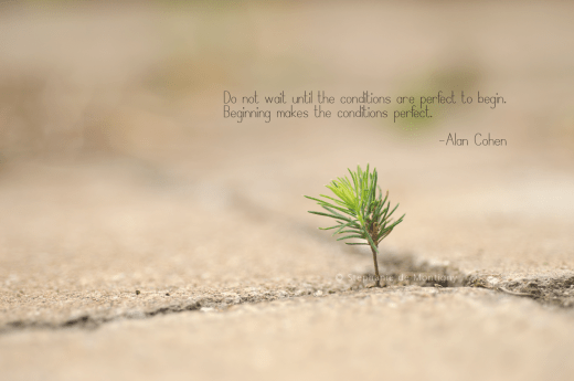 inspirational-life-quote-begin-again-alan-cohen-perfect-conditions-stephanie-de-montigny-baby-tree