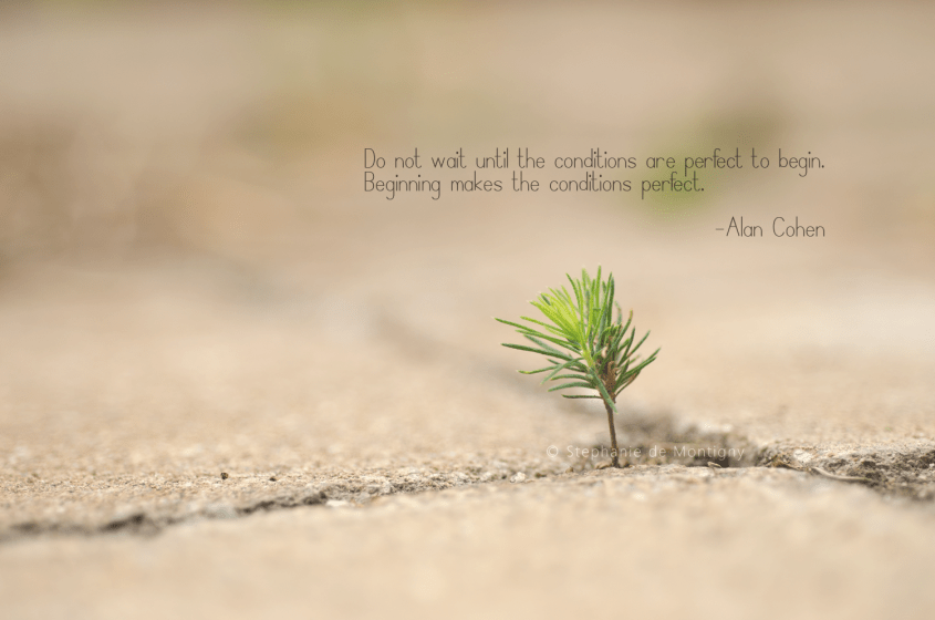 inspirational-life-quote-begin-again-alan-cohen-perfect-conditions-stephanie-de-montigny-baby-tree, blogging in the 613
