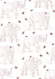 affiche70x100cm_coccinella elephantus