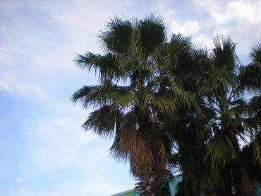 I miss seeing palm trees!