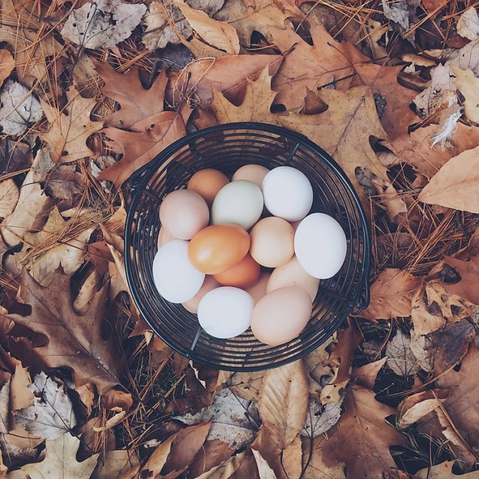 Eggs are one of the many benefits of Community Supported Agriculture