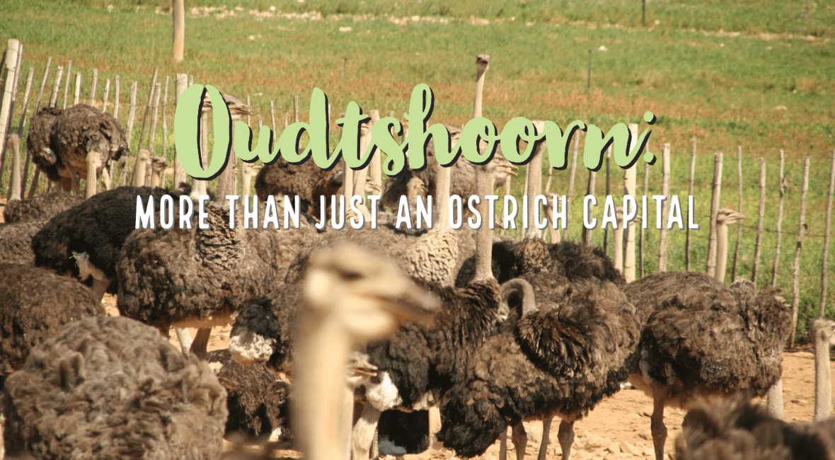Oudtshoorn: More than just an Ostrich Capital