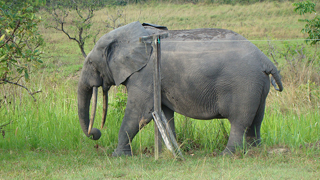Night of the Forest Elephants