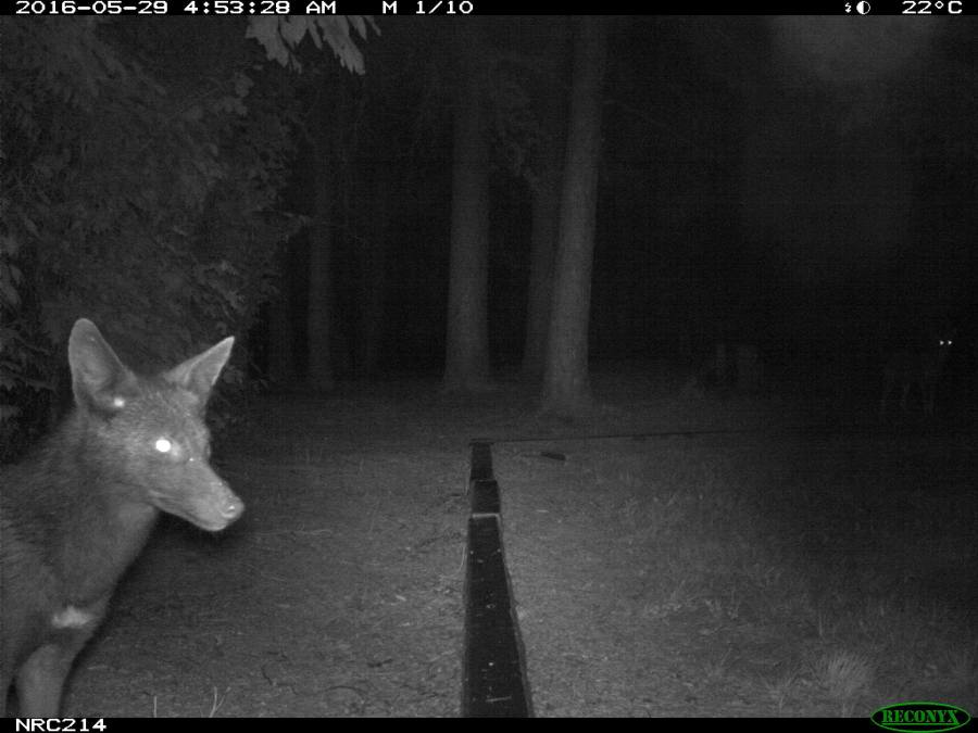 Camera Trap Photos from North Carolina