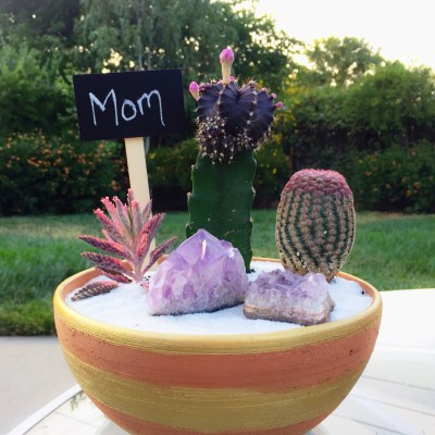 Mothers Day Cactus Arrangements