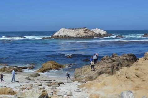 View of Bird Rock