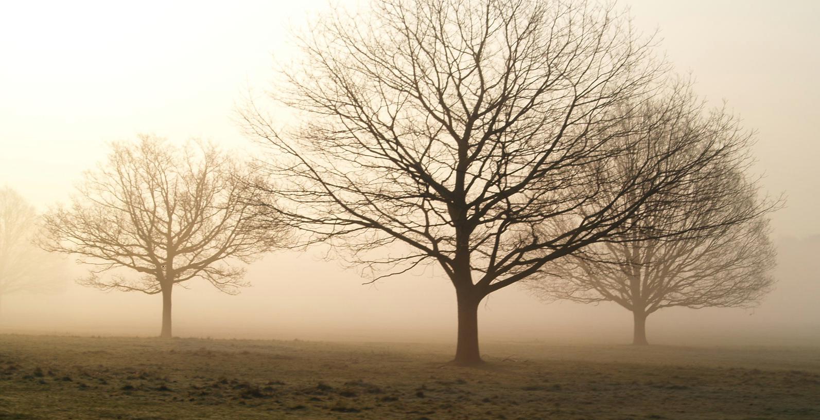golden-mist