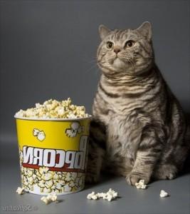 cinema popcorn 1