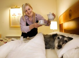 Dogs stay free of charge at Coninston hotel