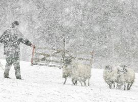 Sheep dog trials in Yorkshire
