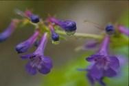 dew_flower