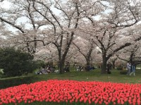 At Kyoto's Botanical Gardens